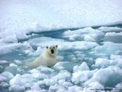 arctic_0910